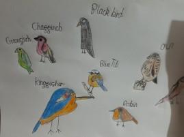 Emily's bird pictures